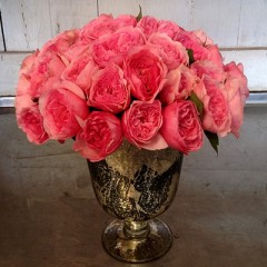 #63-Pink Lady