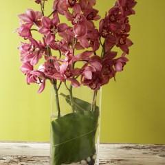 #24-Cymbidium Orchids