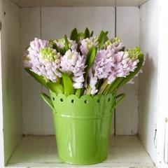 #17-Hyacinth Tin